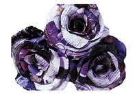 Paper Roses Fine Art Print