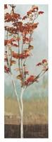 Maple Tree II Fine Art Print
