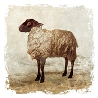 Rustic Sheep Fine Art Print
