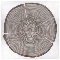 Tree Lines Fine Art Print