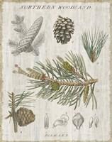 Woodland Chart III Framed Print