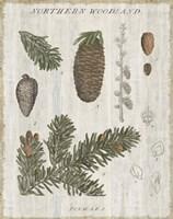 Woodland Chart IV Framed Print