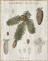 Woodland Chart V Framed Print