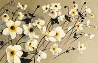Anemones Japonaises Blancs Fine Art Print