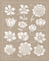 Anemone Plate I Framed Print