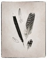 Feather Group II BW Framed Print