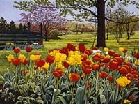 Tulip Garden Fine Art Print