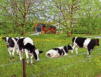 Bovine Beauties, Pennsylvania Fine Art Print