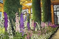 Longwood Gardens - Delphinium, Pennsylvania Fine Art Print