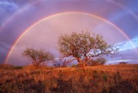 Arizona Rainbow Fine Art Print