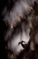 Bighorn Silhouette Best Fine Art Print
