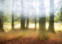 Blurred Trees Fine Art Print