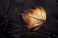 Bright Leaf Fine Art Print