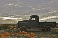 Black Truck In Pumpkin Patch 1 Fine Art Print