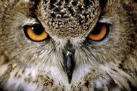Eagle Owl Fine Art Print