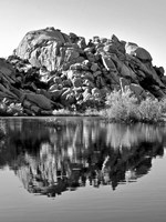 Joshua Tree Lake BW Fine Art Print