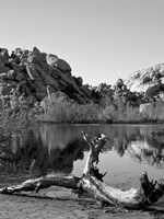 Joshua Tree Lake with Log BW Fine Art Print