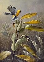 Meadow Gold Fine Art Print