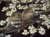 Dogwood Hideout - Young Raccoons Fine Art Print