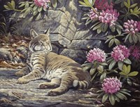 Bee Watching Bobcat Fine Art Print
