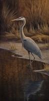 Heron Wading Fine Art Print