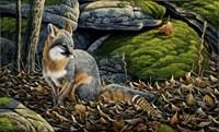 Grey Fox Fine Art Print