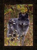 Wolf II Fine Art Print