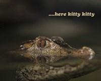 Here Kitty Gator Fine Art Print