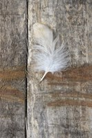 Feather on Wood I Framed Print
