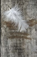 White Feather on Wood Framed Print