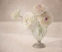 White Persian Buttercups Posy Fine Art Print