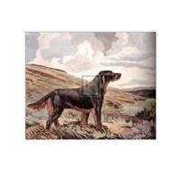 Gordon Setter Fine Art Print