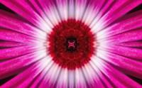 Purple Bloom Fine Art Print