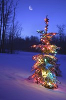 Bright Tree in Snow Fine Art Print