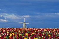 Windmill with Tulips Fine Art Print