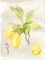 Watercolor Fruit II Fine Art Print