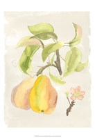 Watercolor Fruit III Fine Art Print