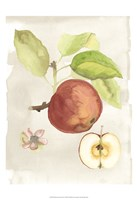 Watercolor Fruit IV Fine Art Print