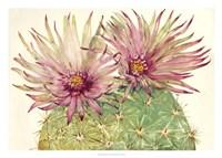 Cactus Blossoms I Fine Art Print