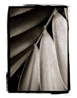 Tropical Plant II Fine Art Print