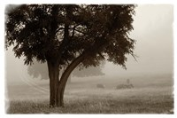 Calm Mist no Limb Fine Art Print