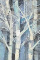 Winter Birches I Framed Print