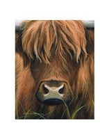 Cow Portrait Fine Art Print