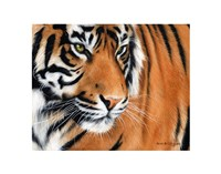 Tiger Crop Fine Art Print