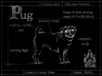 Blueprint Pug Fine Art Print