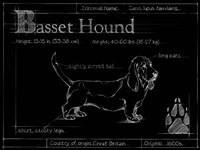 Blueprint Bassett Hound Fine Art Print