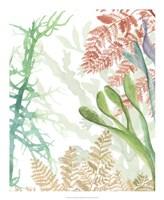 Woven Seaplants I Framed Print