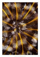 Feather Treasure - N. Sulawesi, Indonesia Fine Art Print