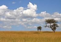 Kenya Tree Fine Art Print