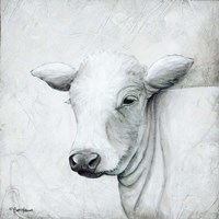 January Cow II Fine Art Print